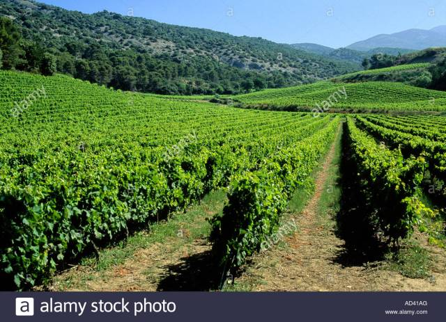 Cotes Du Rhone Vineyards