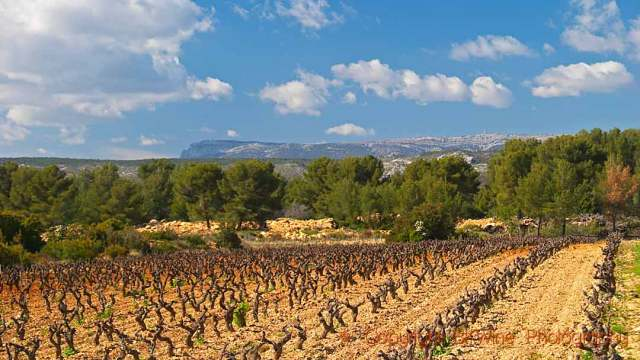 Vineyards, pine forests and mountains in Provence, copyright BKWine Photography