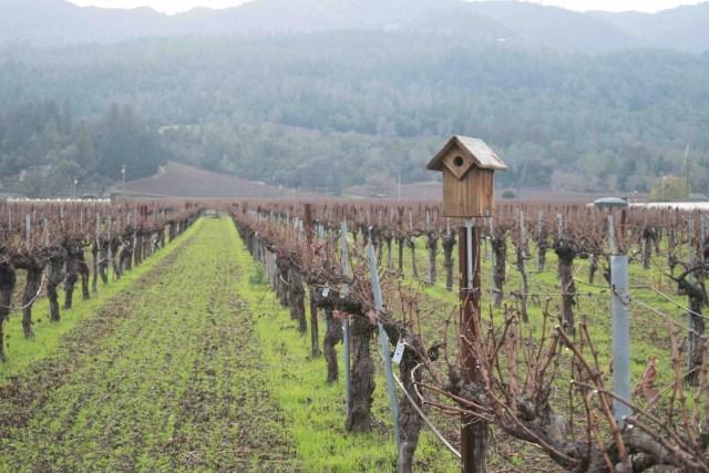 Corison Winery: Kronos Vineyard in St. Helena Napa Valley. Photo Credit: Corison Winery
