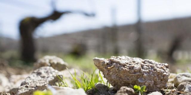 Kimmeridgean soils contain fossilized oyster shells / Courtesy Vins de Bourgogne