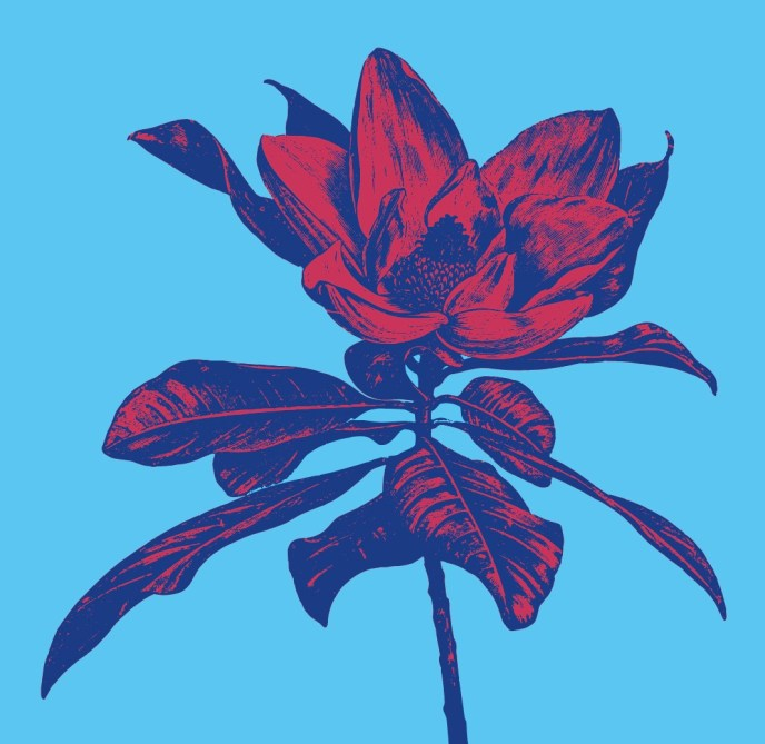 Magnolia in red and blue