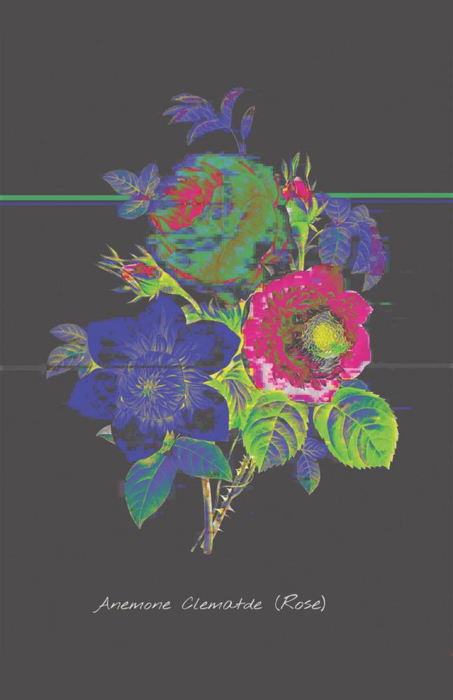 Secret Life of Flowers - Rose