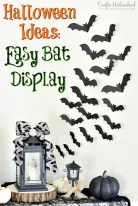 Bat Display
