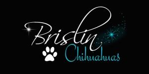 Brislin_Chihuahuas_1 JPG