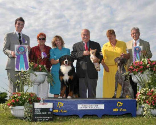 CH. Saiyai's Miracle Moment To Brislin, BEST PUPPY IN SHOW