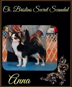 Ch. Brislins Secret Scandal. Handled by Hiram Stewart