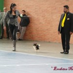 Ozzie & Claudia Garzon in Colombia, Springsunset Kennel