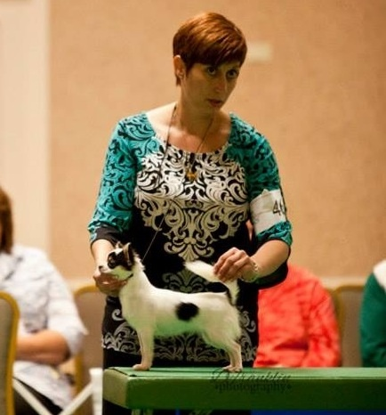 CH. Brislins Once Upon A Scandal, showing att CCA nationals 2013 ~ winning 1st. In Her Class