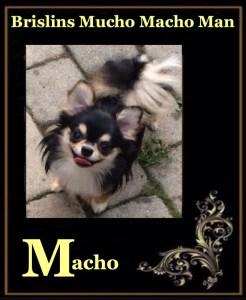 Brislins Mucho Macho Man