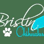 Brislin_Chihuahuas_1