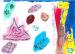 A child's artwork - Mississauga Dentist - Bristol Dental