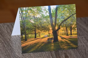 thompson memorial park dawn greeting card by brithikesontario