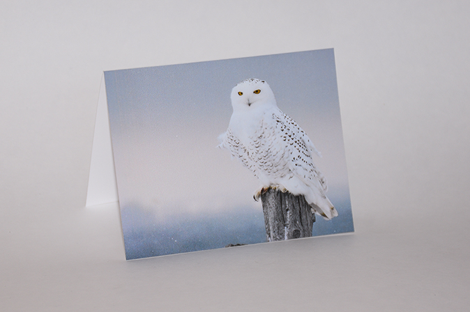 Snowy Owl Greeting Card by BritHikesOntario