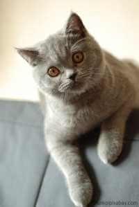 Überlegungen vor Kauf einer Katze