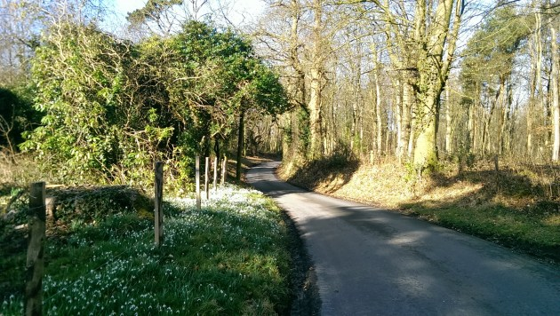 Don't be fooled, it may look pretty, but  this is the beginning of the descent into Penhurst. All off camber turns and gravel, you'll need  your wits about you!