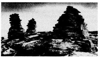 cairns at Glen Sharvie