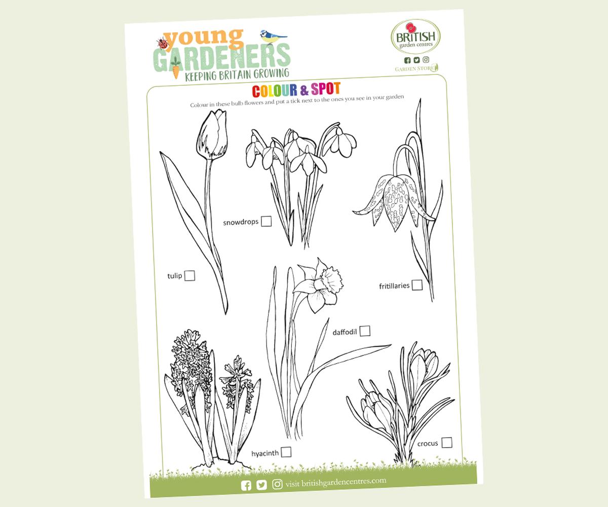 Summer bulbs download colouring sheet