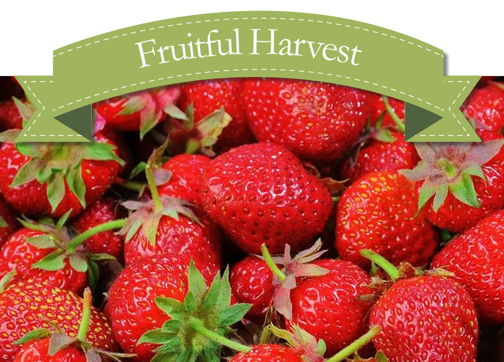Strawberries NOW IN