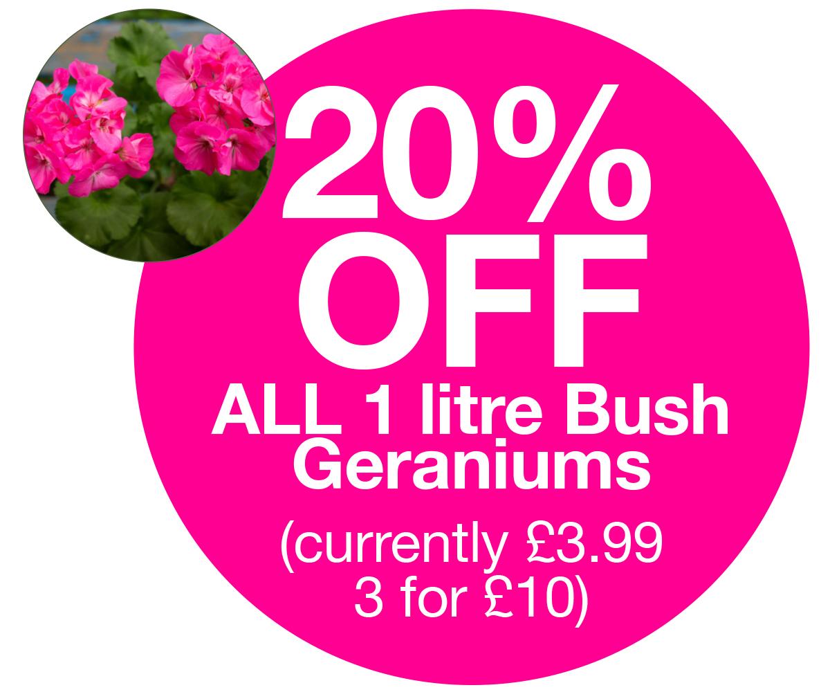 1ltr geraniums 20% off