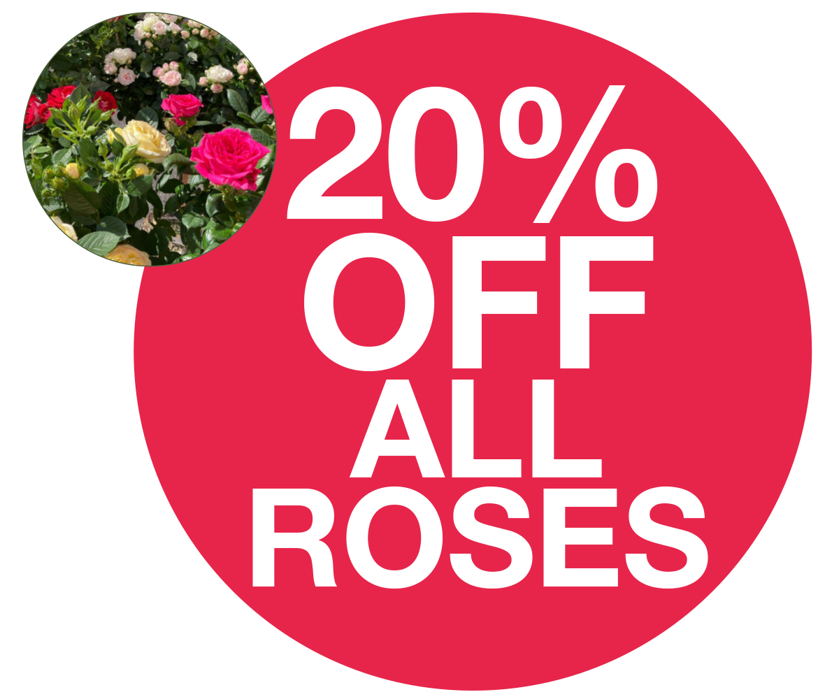 Family Card 20% OFF Roses