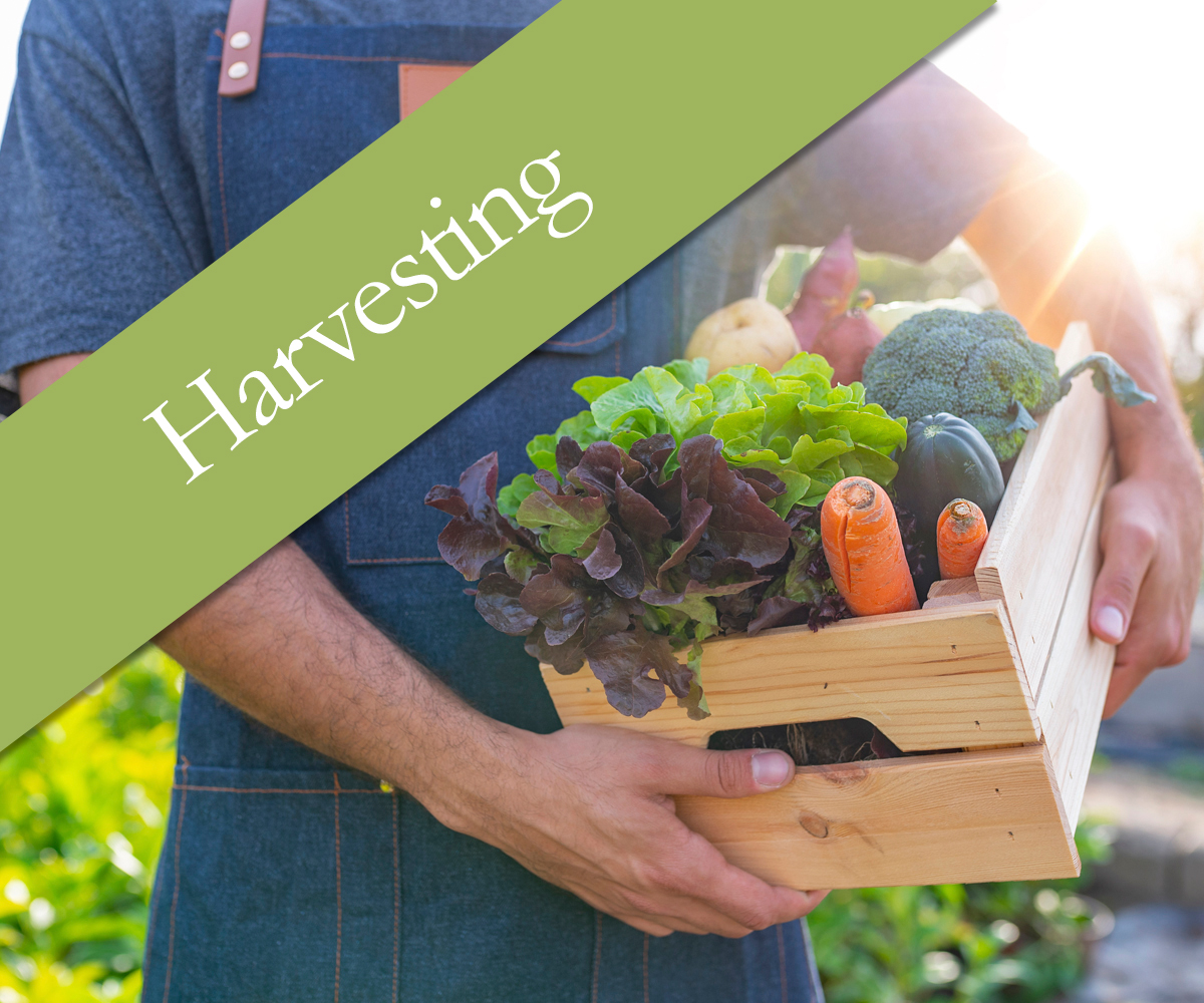 Harvesting your crops