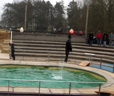 whipsnade zoo_sealions_12032012 (11)