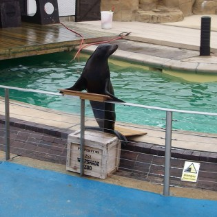whipsnade zoo_sealions_12032012 (5)