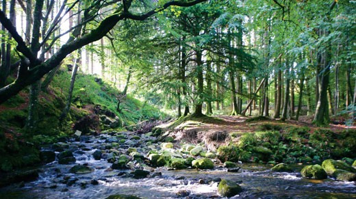 The Haunted Forest Filming Location Tollymore Forest Park County Down