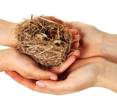 nest, birds, life, new life