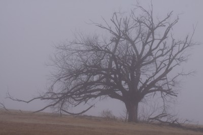 Journey to Joy: The Grief Tree