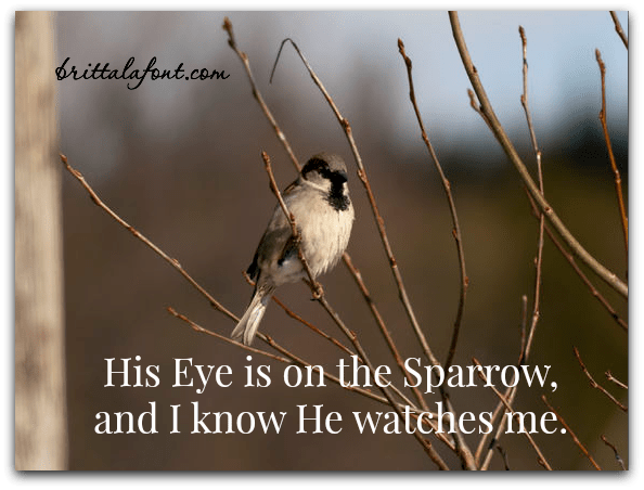 His Eye is on the Sparrow and I know He watches me