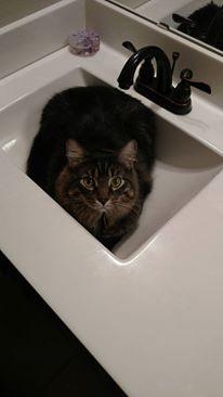 cat-sink