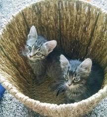 cats-basket
