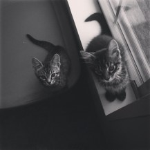 cats-bw