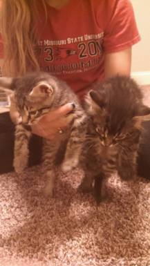cats-new
