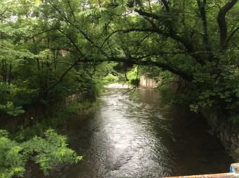 creek in Woodstock