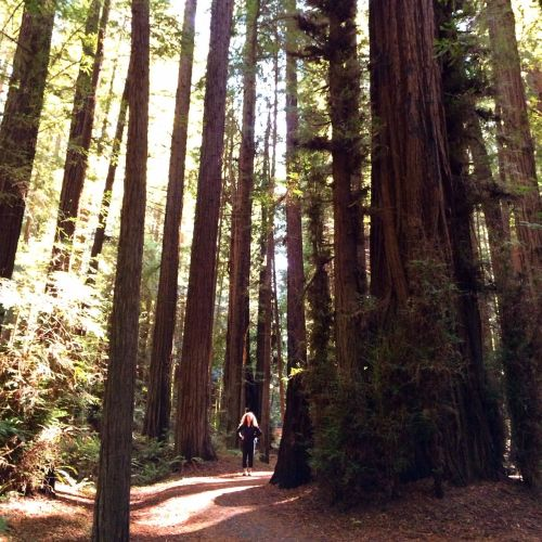 Me in the Redwoods