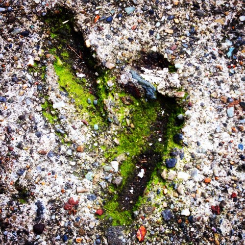 Mossy Heart in the Sidewalk
