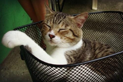 Puss in hannah Basket