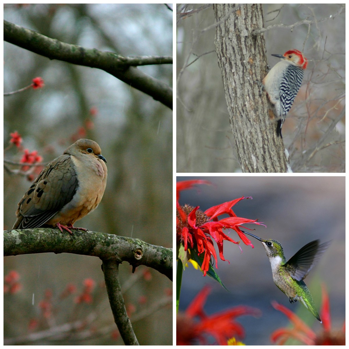 Are you a hummingbird, a woodpecker, or a dove?