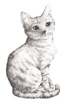 kitten 2 website_640