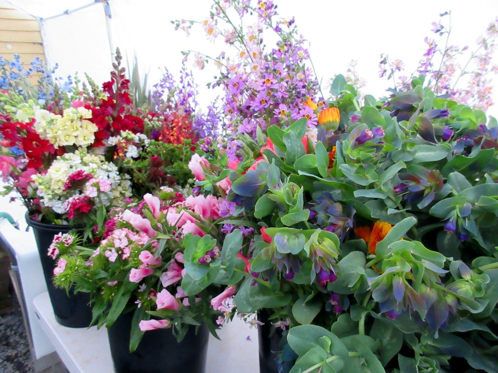 Buckets of spring flowers