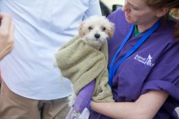 The small pup with a broken leg makes the transport and will receive expert veterinary care while staying at MLAR, which specializes in caring for animals with orthopedic injuries. Photo Credit: Matt Liptak