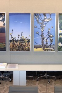 Custom Framing and Art Installation for Corporate Client