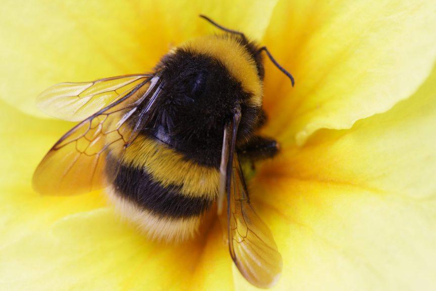 Bees – The June Gap