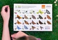 Butterfly ID chart
