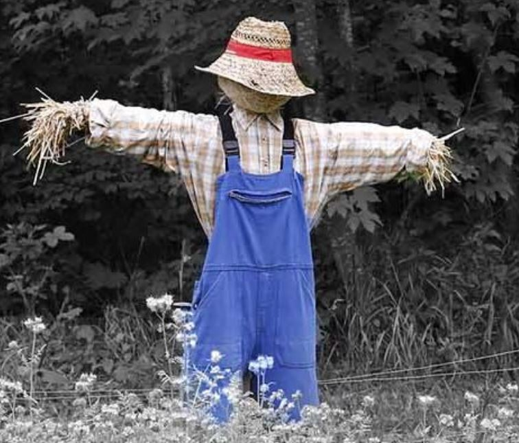 Join Beaminster's Scarecrow Treasure Hunt in August