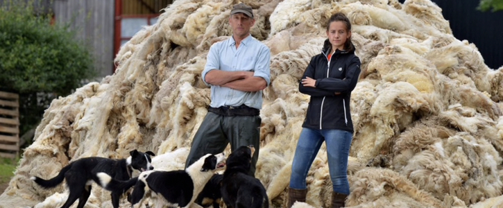 Petition to Help Sheep Farmers Make a Decent Income From Their Fleeces