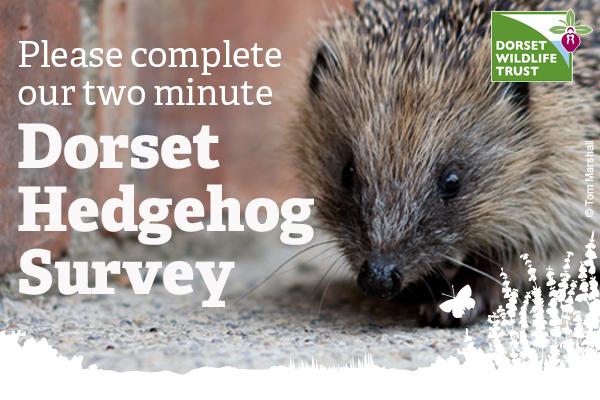 Dorset Hedgehog Survey