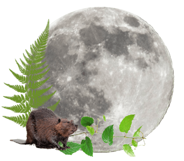 Full Moon on Monday, 30th November
